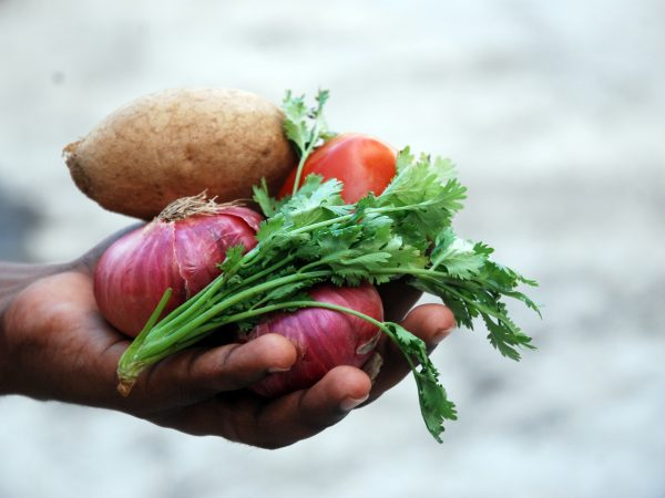 image of a hand holding red onions, parsley, a tomato and a potato